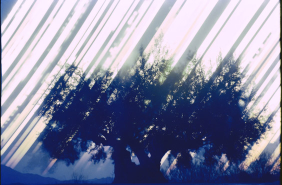 """Ken Kitano, fototentoonstelling expositie bij Ibasho """"Gathering Light"""""""