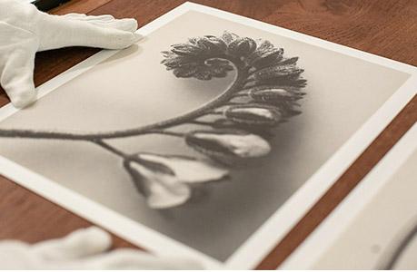 Kopen van fotografie
